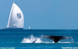 whale-sailing-boat